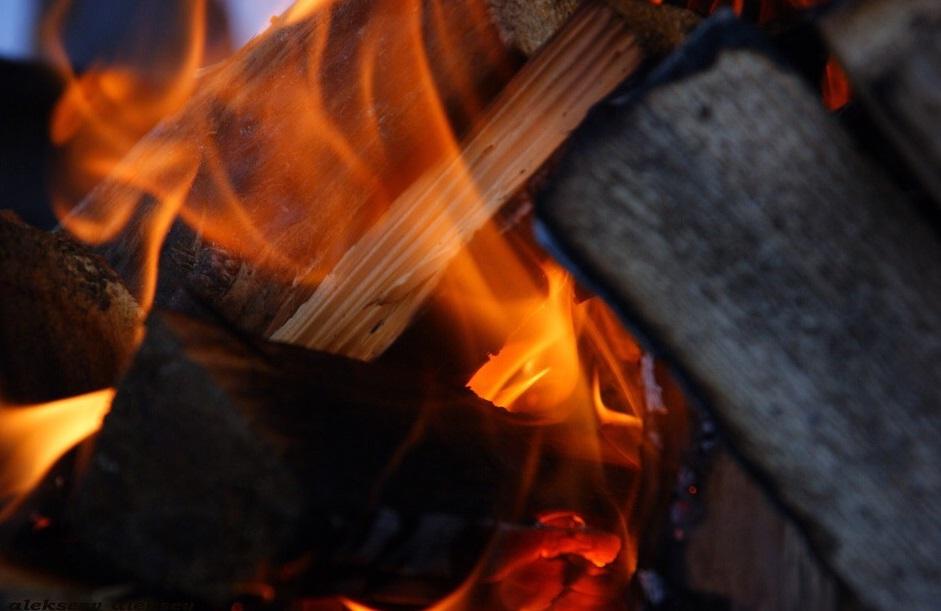 Токсовский зубровник. Фото: vk.com/parkzubrovnik