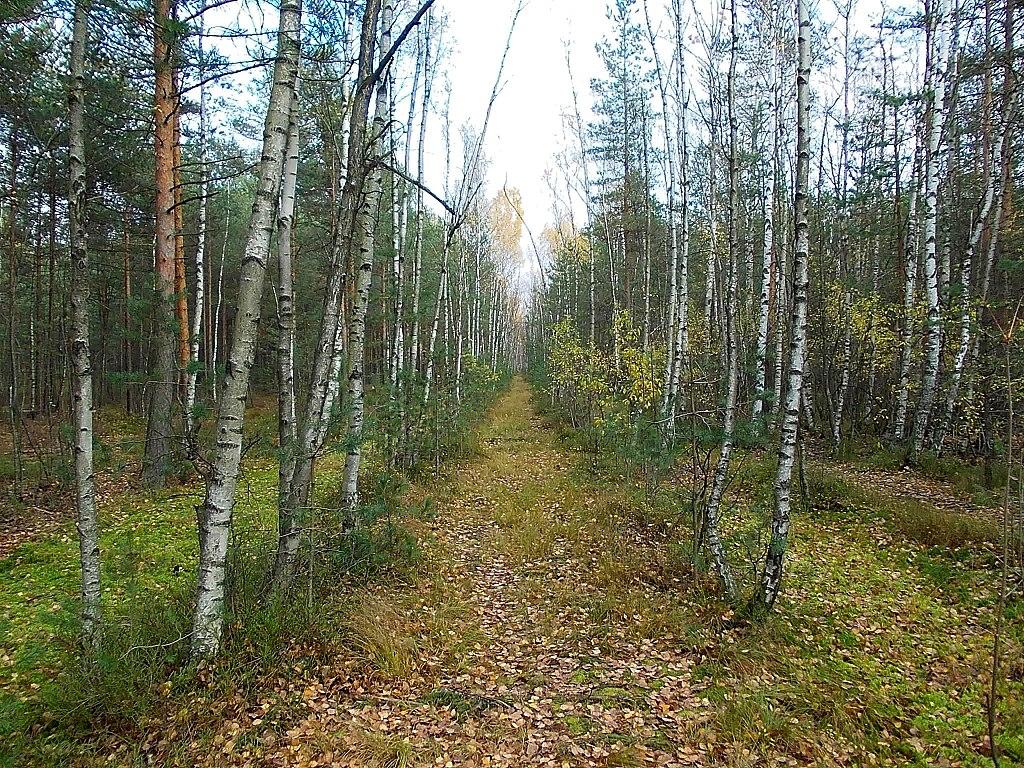 Просека в лесистой части парка. Фото: Uz1awa (Wikimedia Commons)