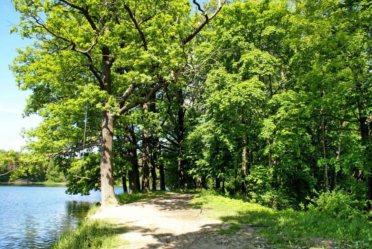 Ивановский пруд, посёлок Ропша