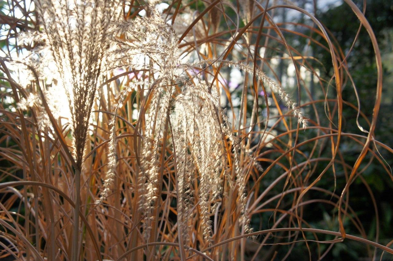 Субтропические растения Юго-Восточной Азии, оранжерея № 6. Фото: Юлия Черняк (botsad-spb.com)