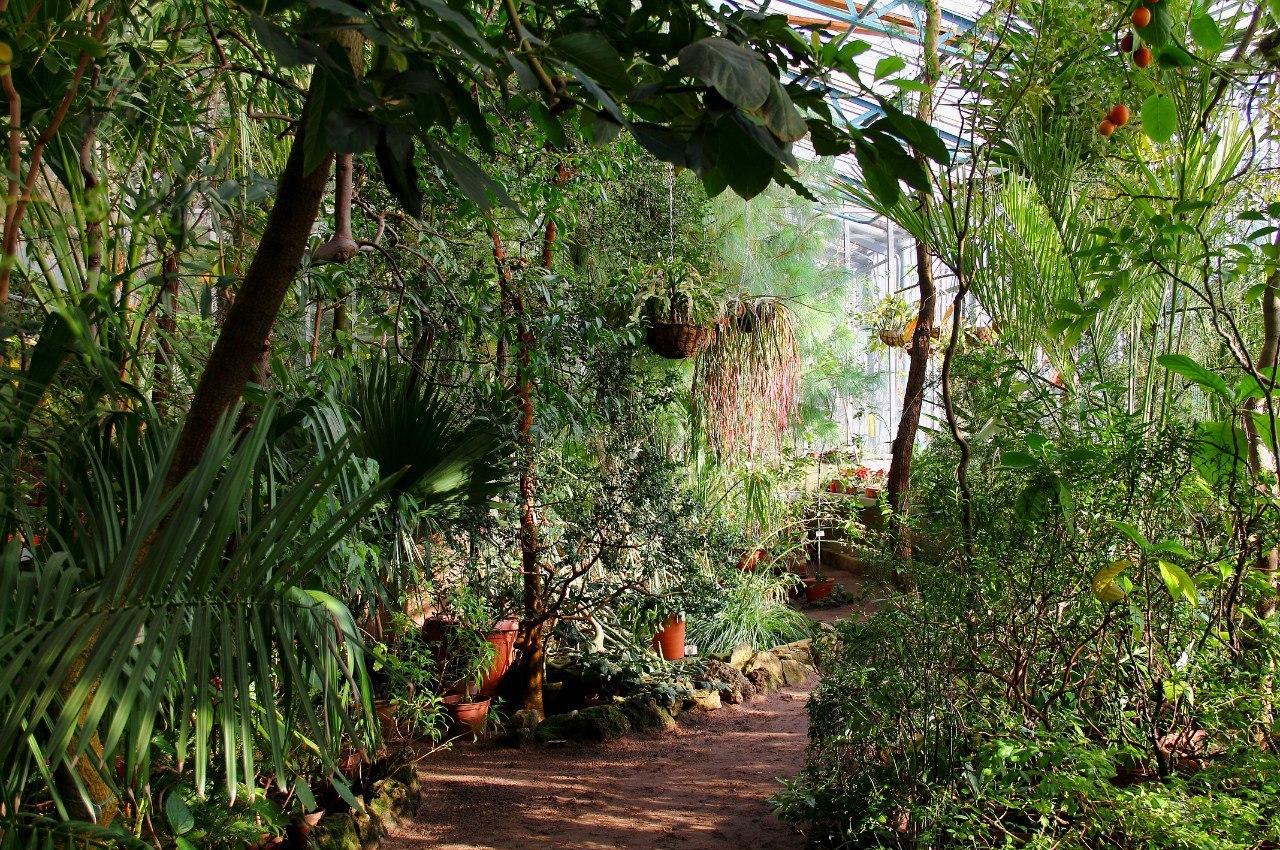 Субтропические растения Северной и Южной Америки, оранжерея № 4. Фото: Ирина Казакова (botsad-spb.com)