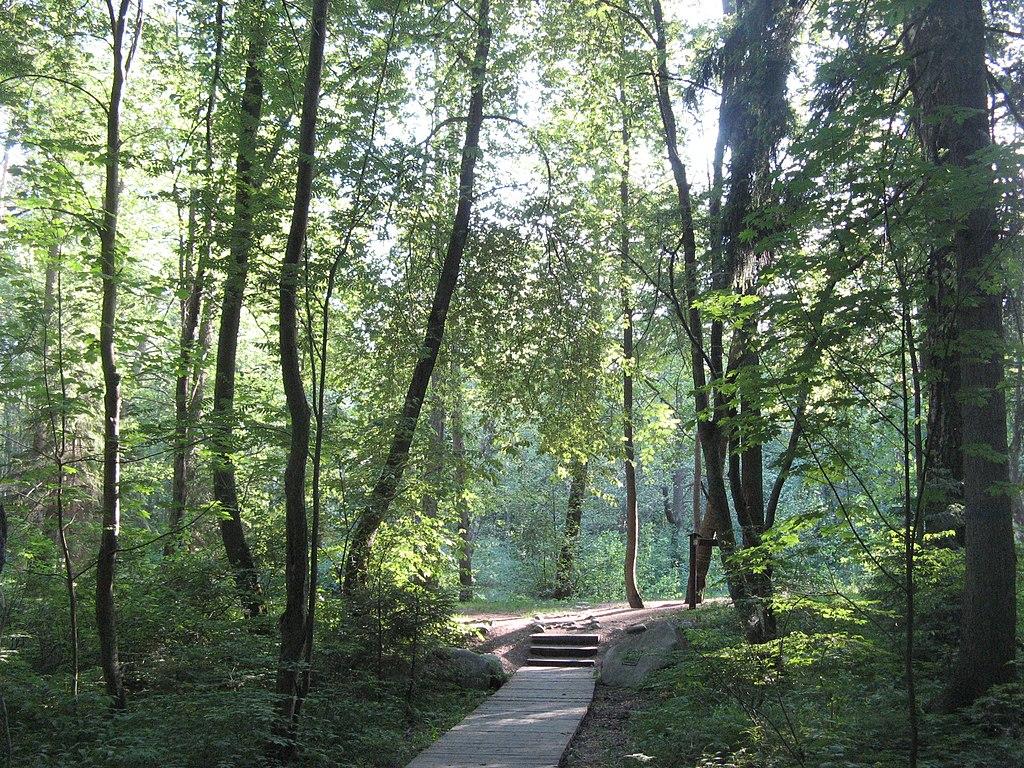 Экотропа на территории памятника природы. Фото: Елена НБ
