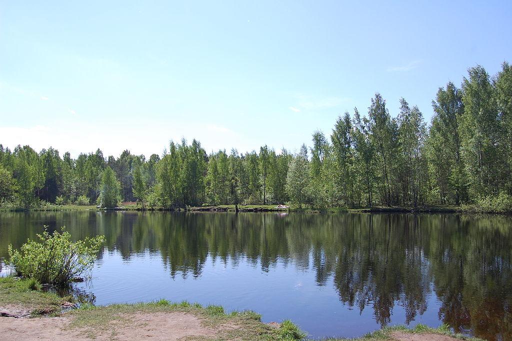 Озеро. Сосновский лесопарк. Фото: Ingvar-fed (Игорь Феденко/Igor Fedenko)