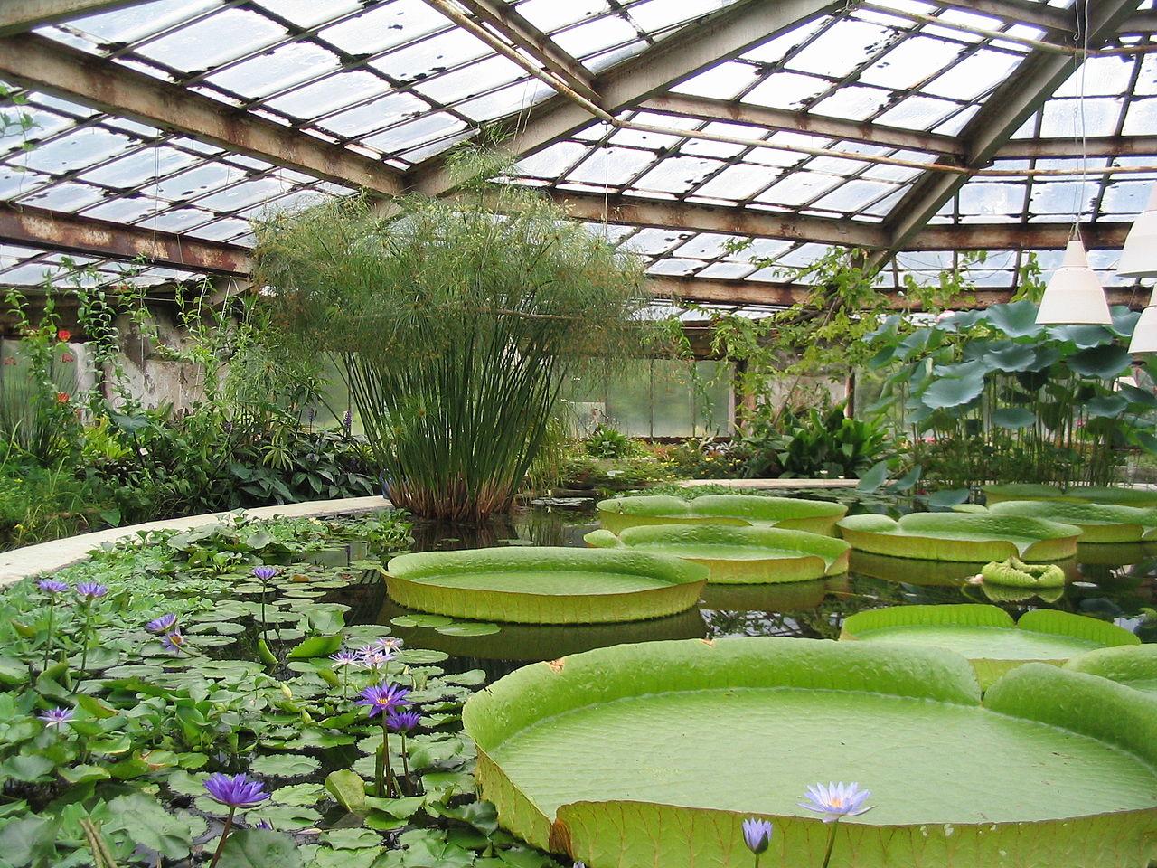 Ботанический сад, оранжерея водных растений. Автор фото: Владимир Иванов (Wikimedia Commons)