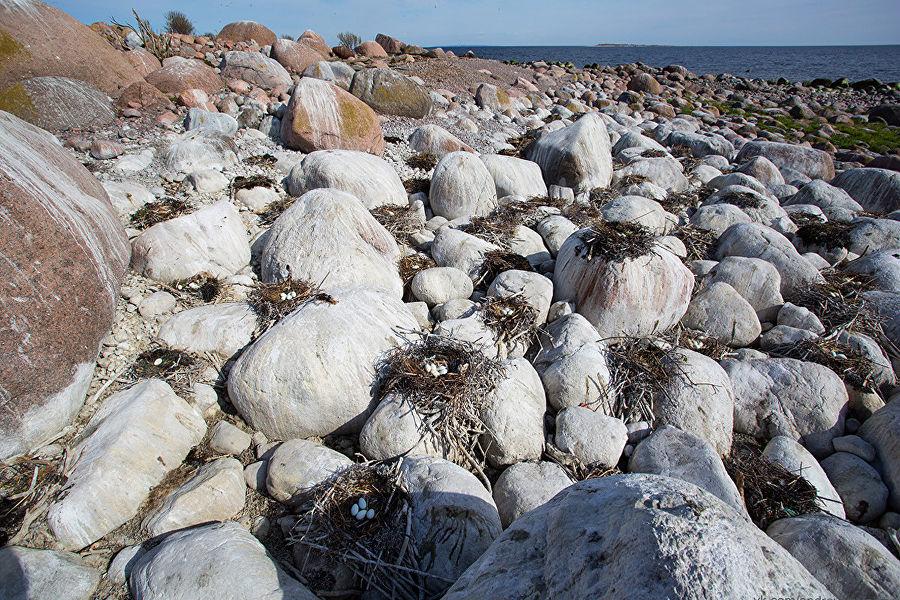 Внешние острова Финского залива. Острова Виргины