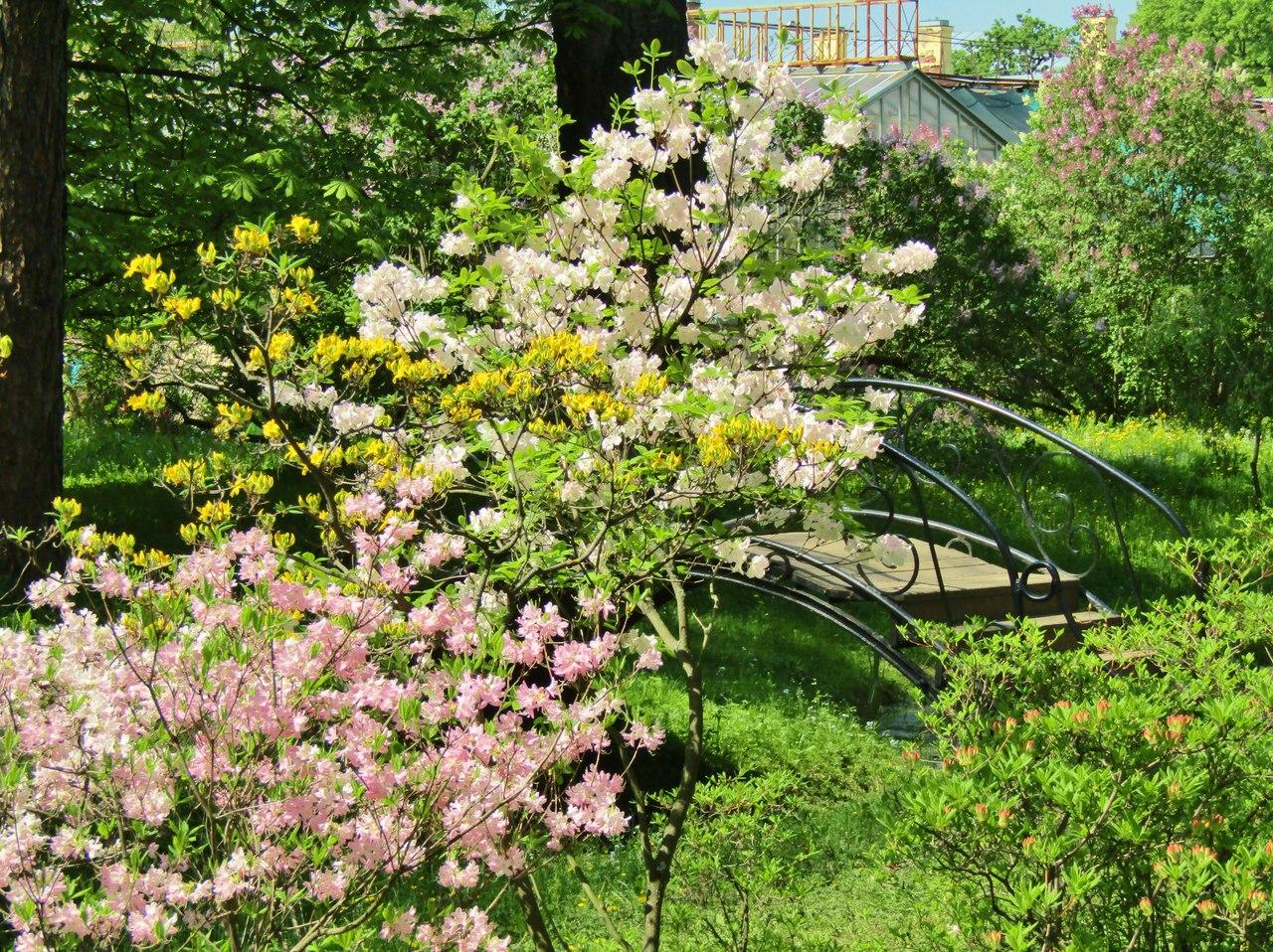 Ботанический сад, Санкт-Петербург. Фото: Галина Стурова
