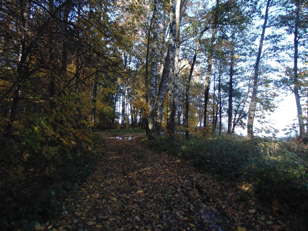 Аллея парка принца Ольденбургского вдоль Финского залива, 15 октября 2018 г. Фото: photoprogulki.narod.ru