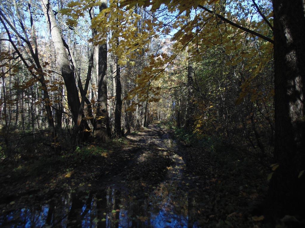 Единственная сохранившаяся аллея парка от Ораниенбаумской дороги к Финскому заливу, 15 октября 2018 г. Фото: photoprogulki.narod.ru