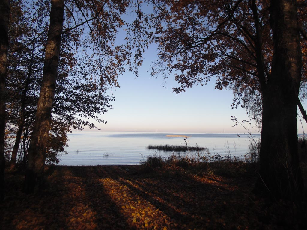Парк фермы принца Ольденбургского. Берег Финского залива, 15 октября 2018 г. Фото: photoprogulki.narod.ru