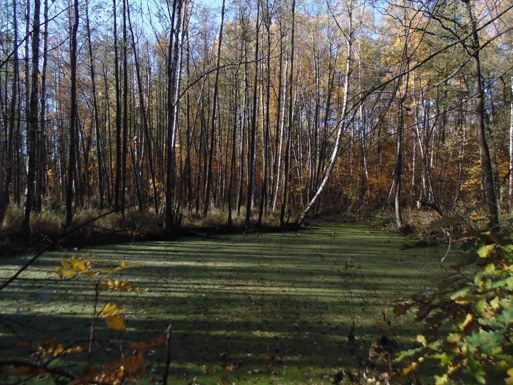 Парк фермы принца Ольденбургского. Недалеко от залива слева от аллеи виден заросший водоем - остатки одного из каналов, 15 октября 2018 г. Фото: photoprogulki.narod.ru