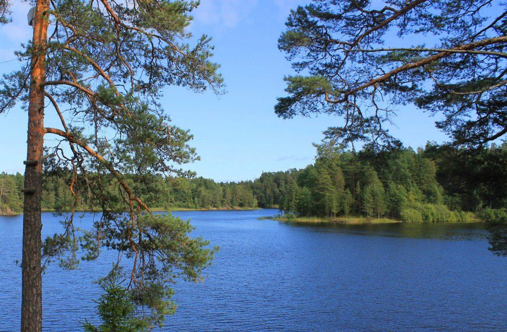 Природа в Токсово. Фото: toksovo-sobor.ru