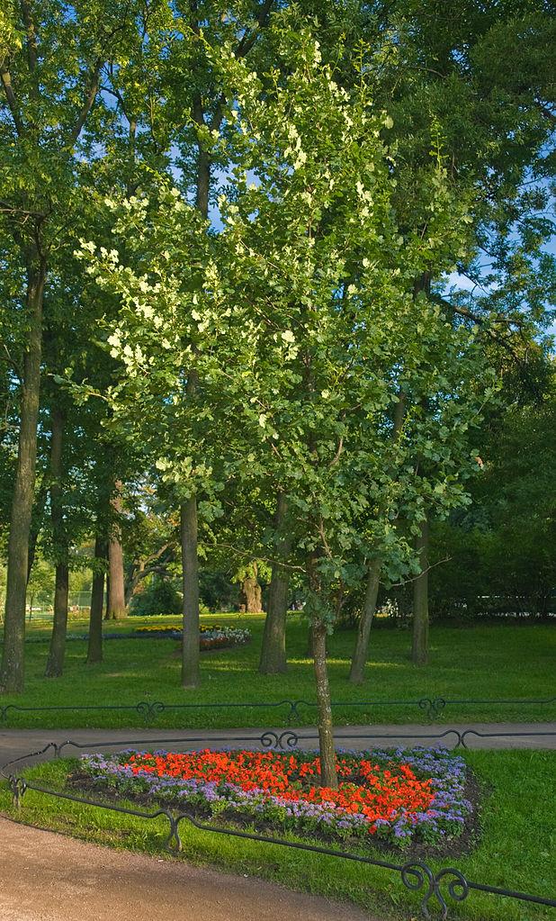 Таврический сад. Фото: George Shuklin (Wikimedia Commons)