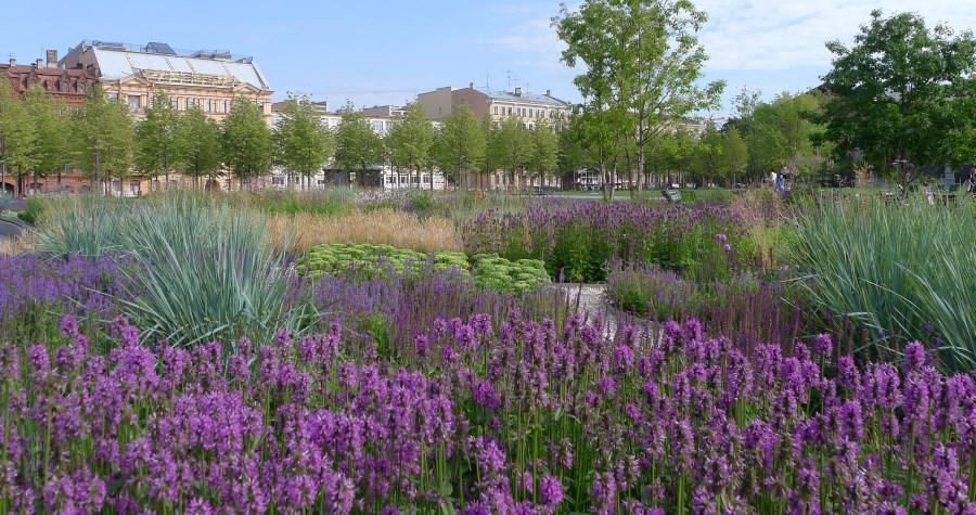 Травяной сад. Фото: newhollandsp.ru