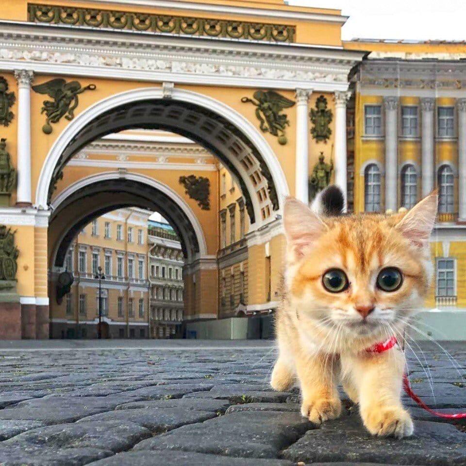 "Санкт-Петербург. Фото: ""Питер:)"" ""ВКонтакте"""