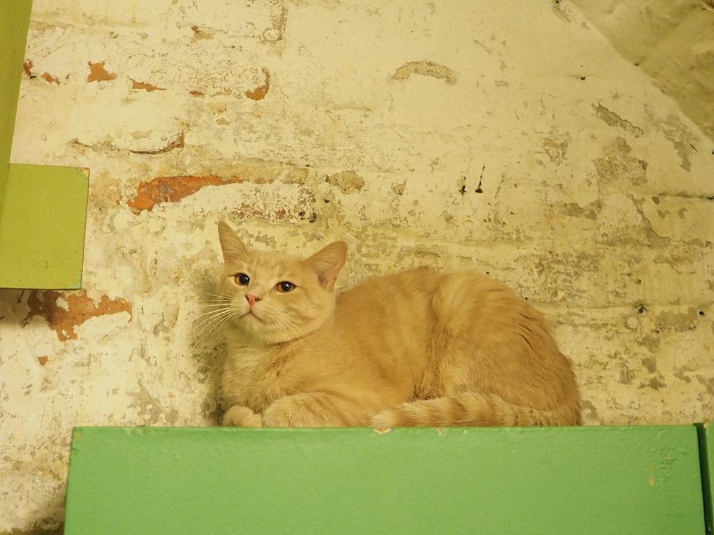 Эрмитажный кот. Фото: hermitagecats.ru