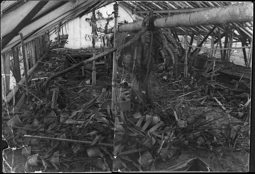 Ботанический сад. В саговниковой оранжерее после взрыва. 16.11.1941 г. Фото В.Федосеев vk.com/botsad_spb