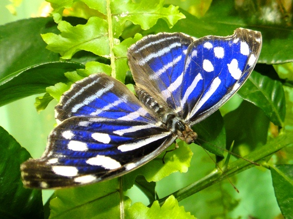 Выставка бабочек под руководством королевского общества садоводства завершилась 6 марта