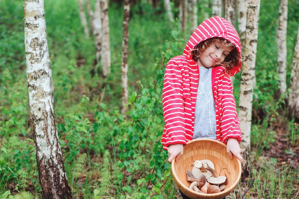 Семейный сбор грибов в лесу