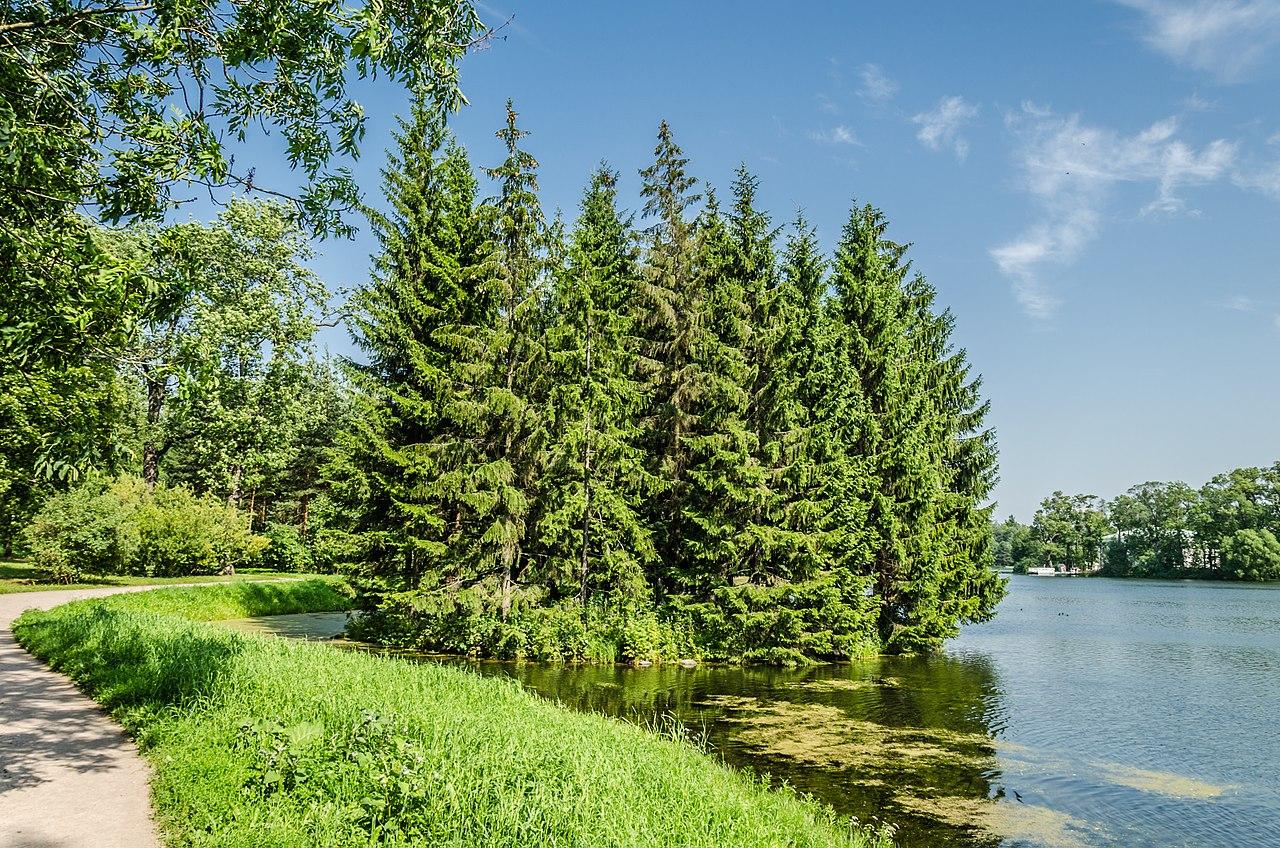 Большой пруд и пустой остров в Екатерининском парке Царского села. Автор фото: Florstein (WikiPhotoSpace)
