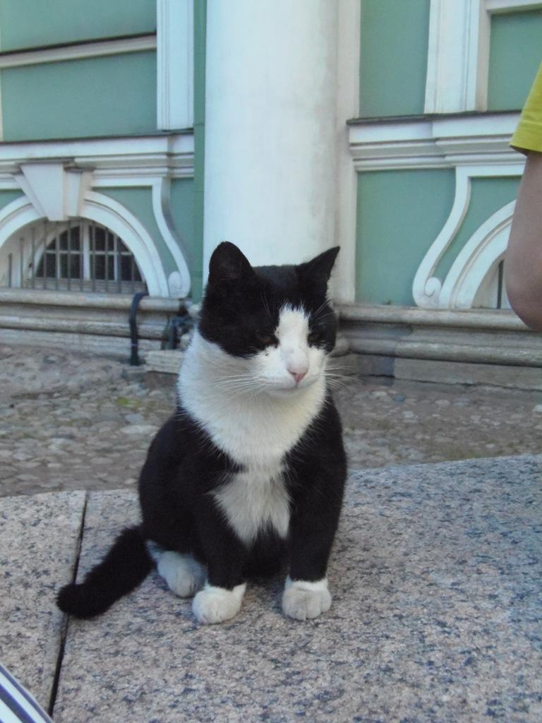 Эрмитажный кот. Автор: Петров Виктор. Источник: https://commons.wikimedia.org/