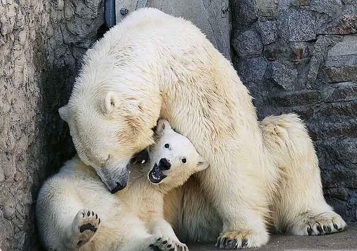 День рождения Ленинградского зоопарка, источник фото: https://vk.com/spbzoopark