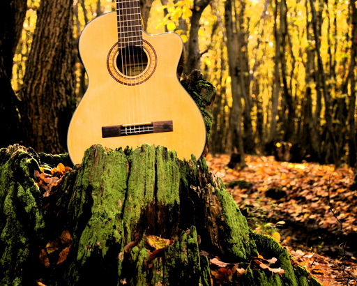 Лес и гитара, источник фото: http://photoshare.ru/photo11232261.html