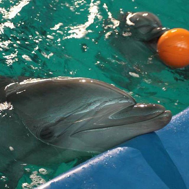 Шоу дельфинов, фото из ВК Автор: Виктория Шамайская