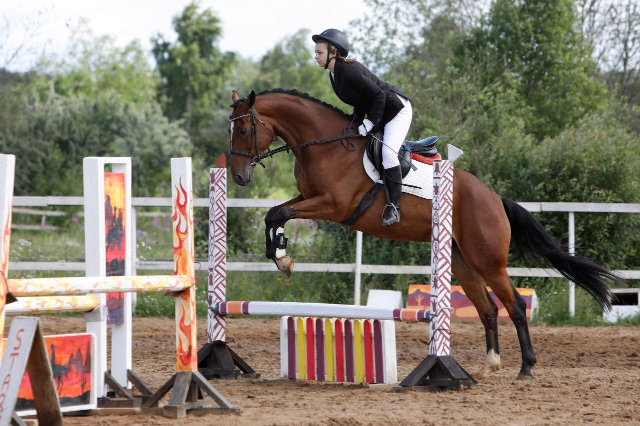 ИППОСФЕРА. Международная конная выставка