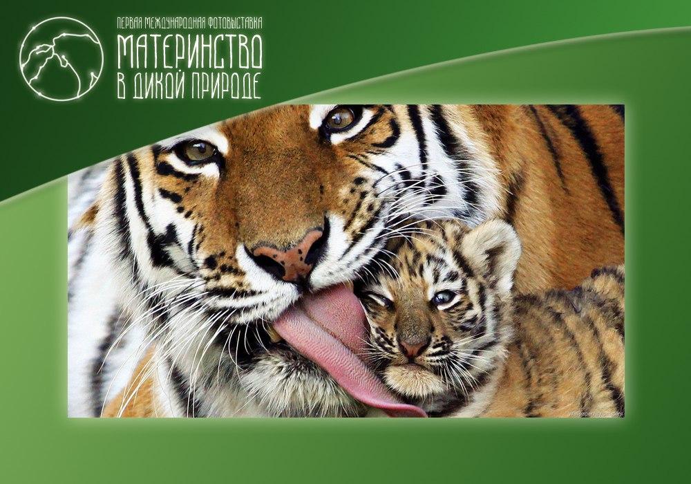 """Фотовыставка """"Материнство в дикой природе"""""""