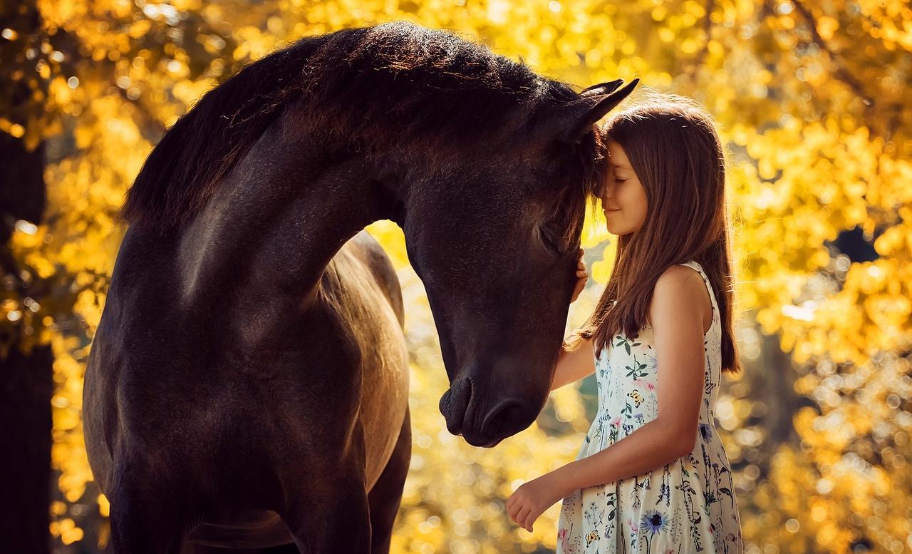 Международная конная выставка Иппосфера-2021 OpenAir!