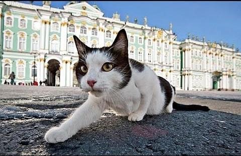 Эрмитажный кот. Источник: https://commons.wikimedia.org/