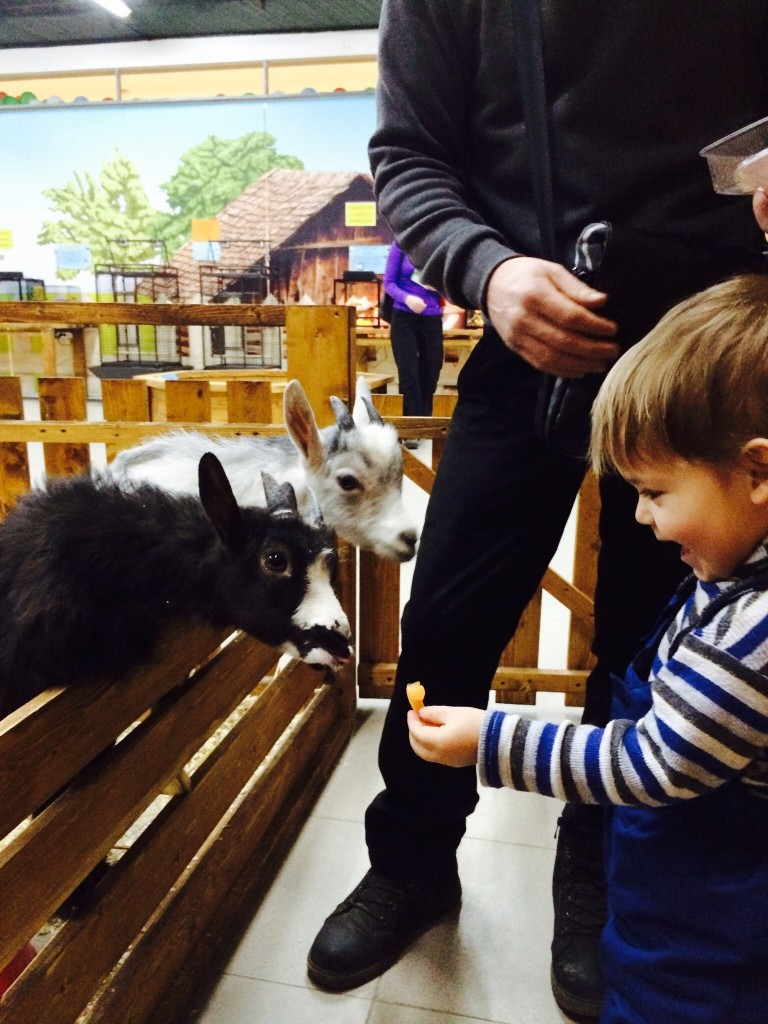 Процесс кормления, автор http://open-zoo.ru