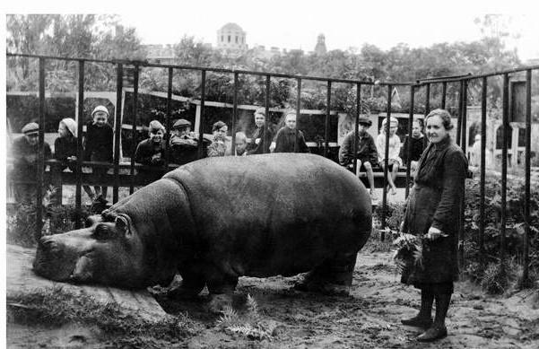 Е. И. Дашина у бегемота Красавица. 1943 г.