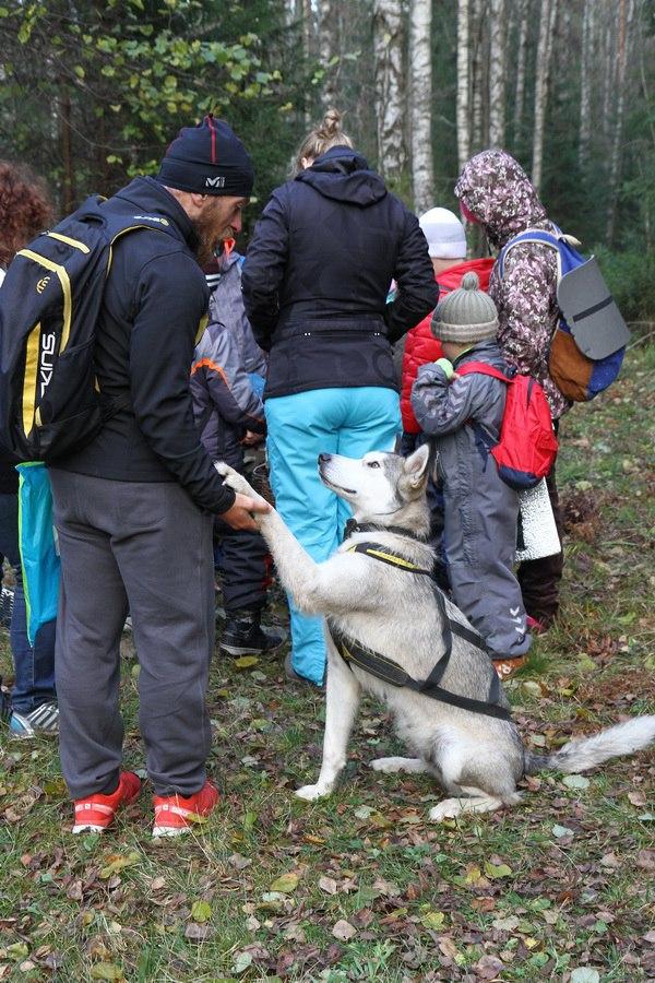 """Экологический центр """"Лесная сказка"""", источник фото: https://vk.com/skazkilesa"""