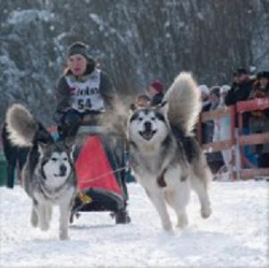 Катание на ездовых собаках, источник фото: http://skazkilesa.ru/katanie-na-ezdovyx-sobakax/