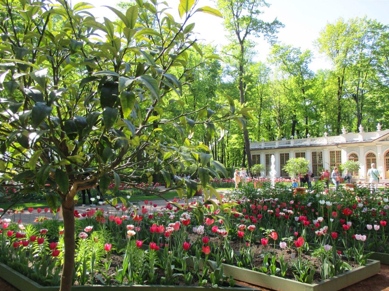 Летний сад. Фото: Юлия Тихомирова