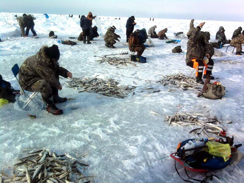 Ловля корюшки в Санкт-Петербурге. Фото: fishingday.org
