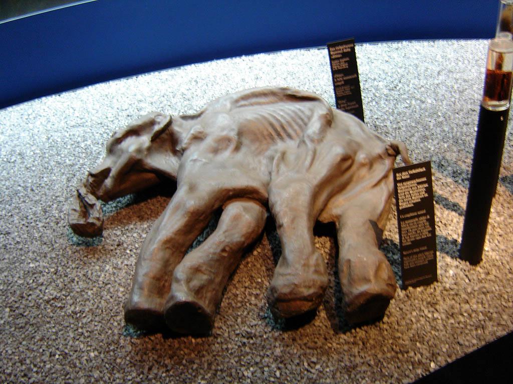 Киргиляхский мамонт. Фото: Denniss (Wikimedia Commons)