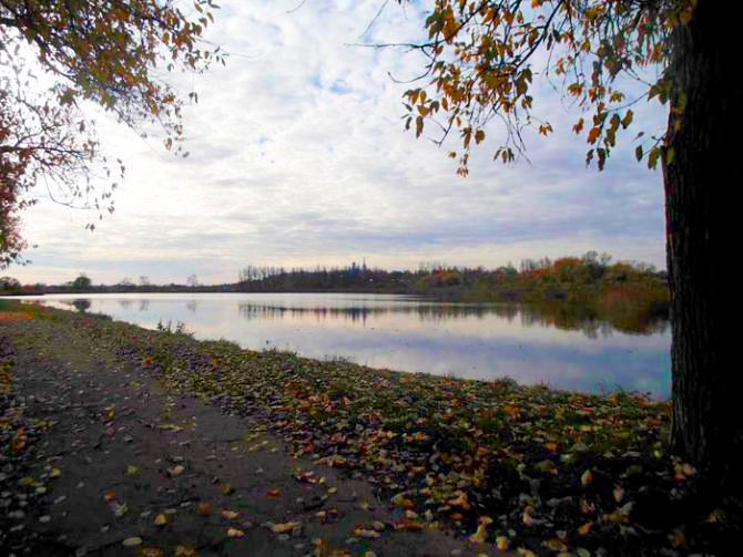 Виды Бабигонского пруда. Петергоф, Луговой парк, 1. Фото: citywalls.ru
