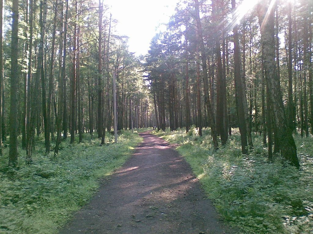 Калининский район, Пискарёвский лесопарк. Фото: Nonexyst (Wikimedia Commons)