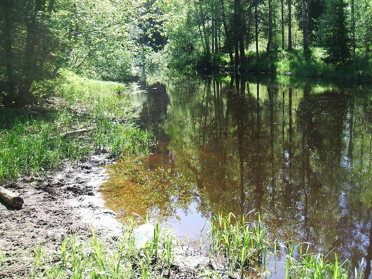 Река Рощинка в Линдуловой Роще, источник фото: Wikimedia Commons Автор: Пётр Иванов