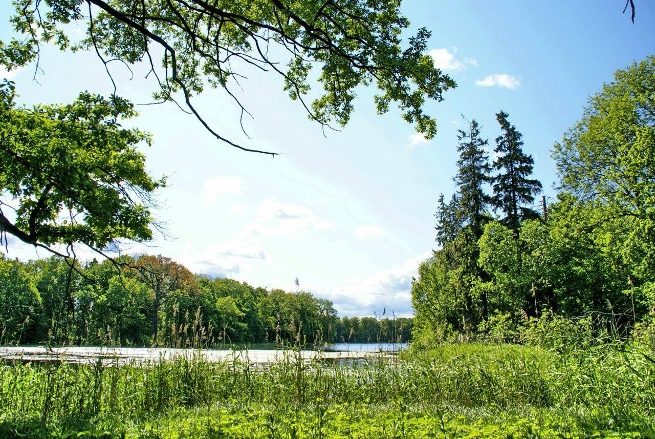 Ропшинский парк, посёлок Ропша, Ленинградская область