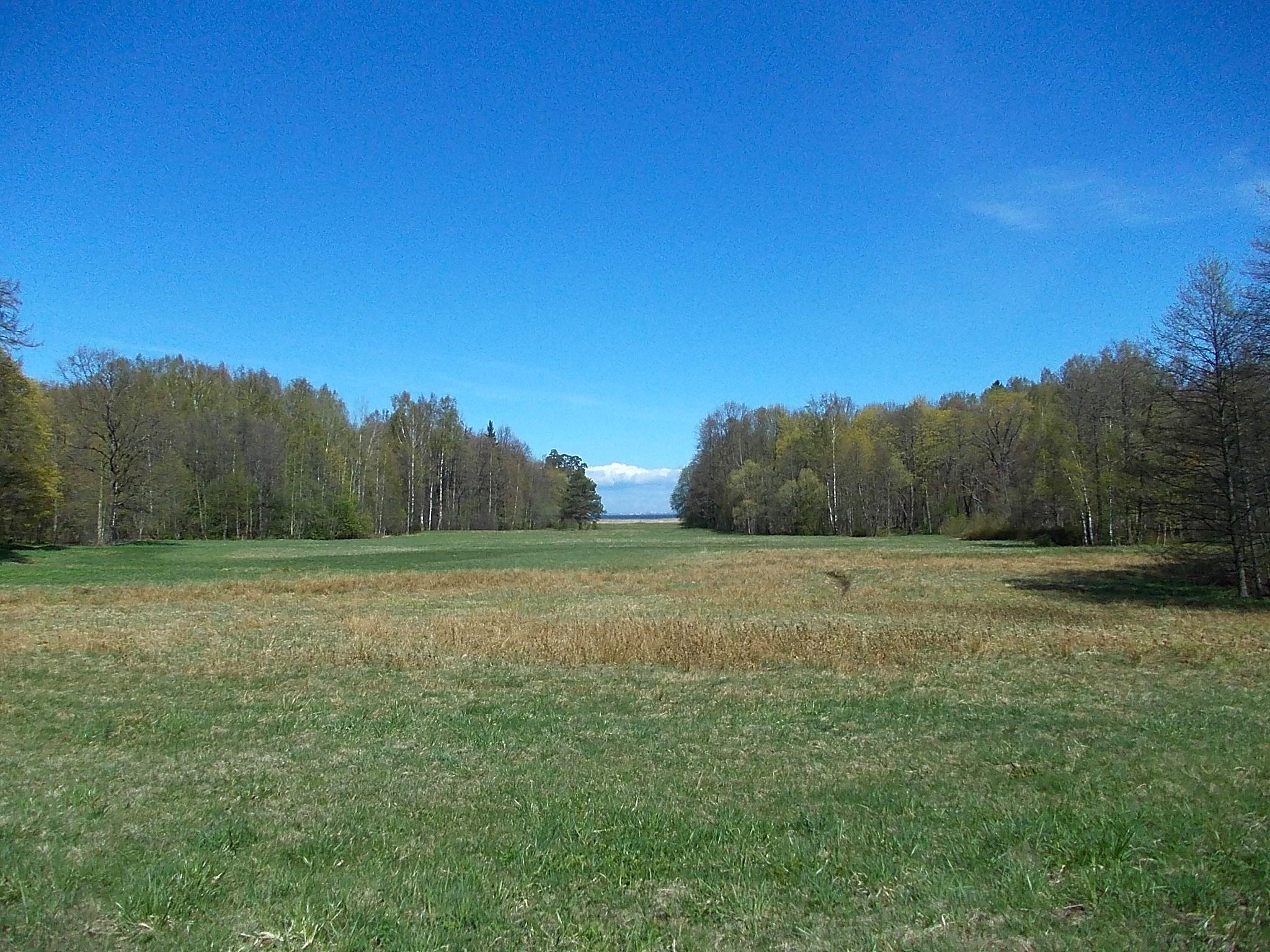 Часть парка прилегающая к Финскому заливу. Фото: Uz1awa (Wikimedia Commons)