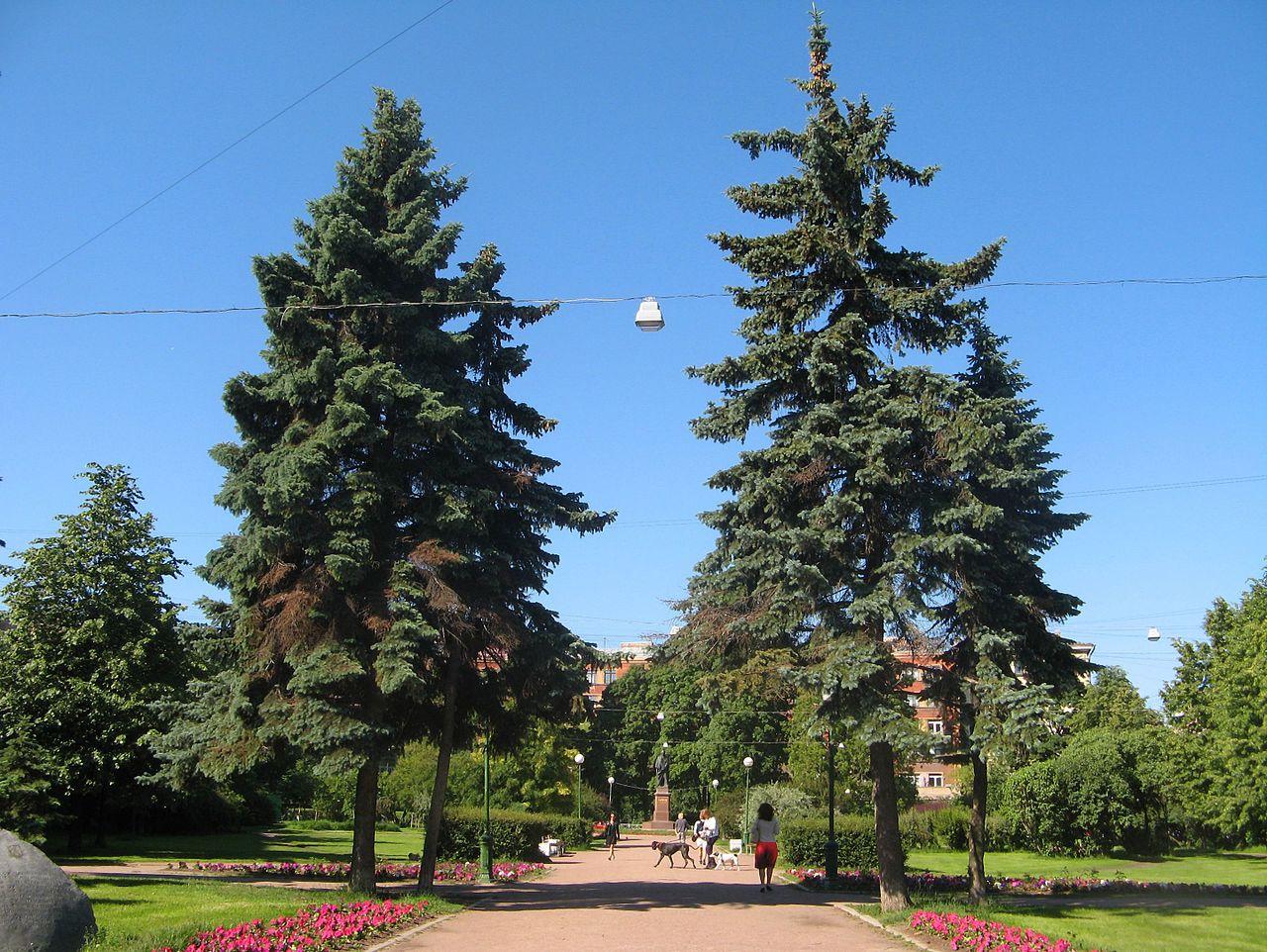 Сквер на площади Шевченко. Автор фото: Екатерина Борисова (Wikimedia Commons)