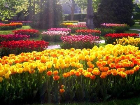 Фестиваль тюльпанов, источник фото: happy-giraffe.ru