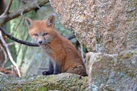 Ду, Живая Природа, Животных, источник фото: pixabay.com