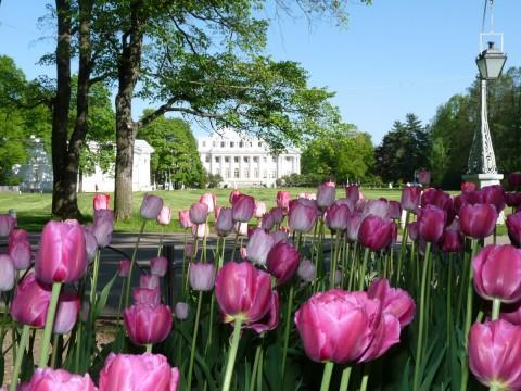 Фестиваль тюльпанов, источник фото: