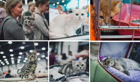 """Выставка """"Мир кошек - 2017"""""""
