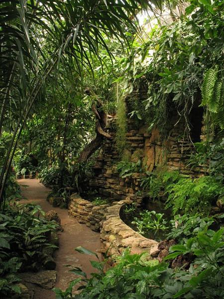 Тропическая оранжерея. Фото: Lawerta