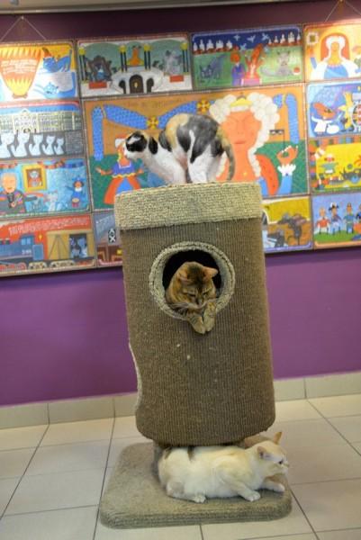 """Кафе и музей """"Республика кошек"""", источник фото: https://vk.com/cats_republic"""